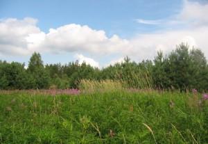 аренда земли в москве на 49 колебания росте