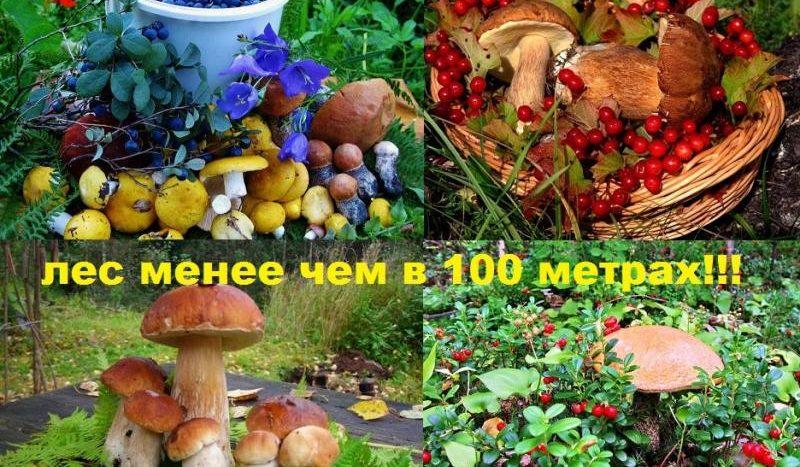 Продажа участка Вирки, Всеволожский район, Дары леса.